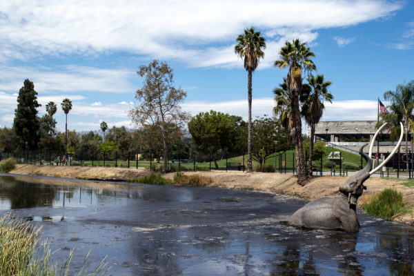 A photo of the La Brea tar pits, a place where bones from Ice Age period animals have been found in the past.